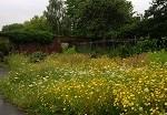 Flower garden.BPCG