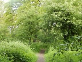 London Woodland