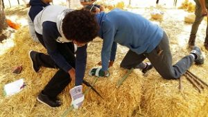 Sawing on strawbales